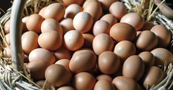 zenandcook-scuola-di-cucina-genova-corso-la-magia-delle-uova